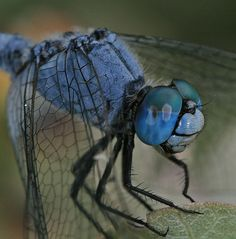 Macro Photography...want to learn this art of photography!