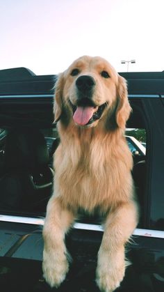 Stunning hand crafted golden retriever accessories and jewelery available at Paws Passion Shop! Represent your golden retriever pup with our merchandise! Perros Golden Retriever, Chien Golden Retriever, Baby Golden Retrievers, Golden Retriever Quotes, Cute Baby Animals, Animals And Pets, Funny Animals, Funny Pets, Cute Dogs And Puppies