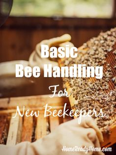 To DIY Aquaponics - The How To DIY Guide on Building Your Very Own Aquaponic System Basic Bee Handling for New BeekeepersBasic Bee Handling for New Beekeepers Beekeeping For Beginners, Buzz Bee, Raising Bees, I Love Bees, Bee Farm, Backyard Beekeeping, Bee Friendly, Bee Happy, Save The Bees