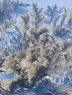 When it gets about -25C these beautiful frost patterns form on the kitchen windows. A Forest of Ferns by Jim Cox.