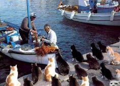 Hungry kitties..... :)