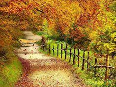 Autumn | Beautiful Autumn Scenery