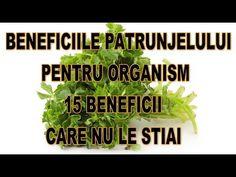 Beneficiile Patrunjelului pentru organism 15 Beneficii care nu le stiai - YouTube Youtube, Vitamins, Plant, Youtubers, Youtube Movies