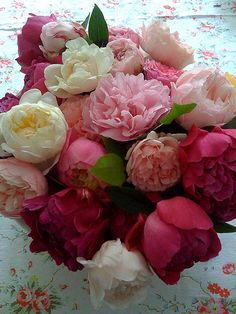 Georgeous Peonies