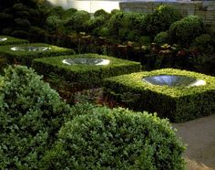 Water features in hedges