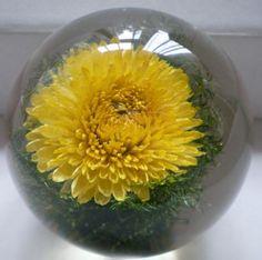 Chrysanthemum Paperweight