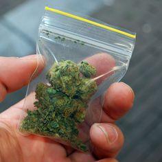 Das Cannabis Verbot in Frankfurt soll abgeschafft werden. Hierfür setzt sich die…
