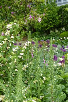 Time in Between garden woodland planting with alliums at the Chelsea Flower Show