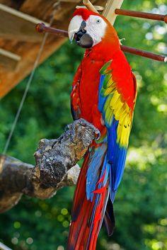 Cute parrot:) I simply love parrots.