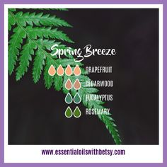 Spring Breeze Diffuser Blend 4 drops of Grapefruit 2 drops of Cedarwood 2 drops of Eucalyptus 2 drops of Rosemary