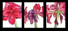 """""""Life of a Flower triptych Floral Watercolor, Watercolor Paintings, Triptych, Flowers, Life, Tri Fold Brochure, Water Colors, Florals, Flower Watercolor"""