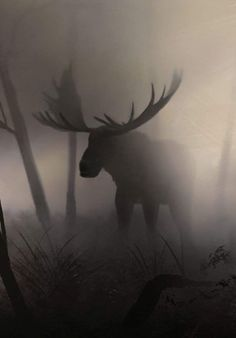 A moose in fog - pics Moose Pictures, Animal Pictures, Moose Deer, Moose Art, Moose Hunting, Bull Moose, Beautiful Creatures, Animals Beautiful, Animals And Pets