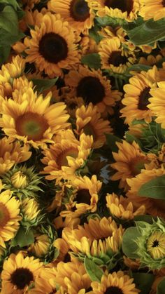 Wholesale Flowers And Supplies, Fresh Flowers, Wedding Flowers, Plants, Flowers, Plant, Planets, Bridal Flowers