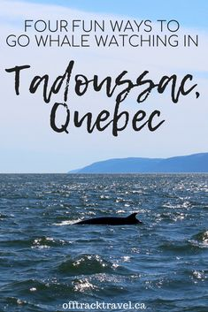 Whale watching in Tadoussac is both incredibly varied and exceptionally easy. We found four fun ways to go whale watching in Tadoussac on our recent visit Cool Places To Visit, Places To Go, Lets Run Away, Canadian Travel, St Lawrence, Quebec City, Whale Watching, Countries Of The World, The Good Place