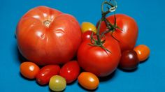 """Supermarket tomatoes have a terrible reputation. But the industry is evolving. More than half of supermarket tomatoes now are grown in greenhouses or """"shade houses,"""" and flavor is improving."""