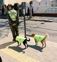 """""""O Grito do Bicho"""": Cinco cachorros resgatados se tornam companheiros ..."""