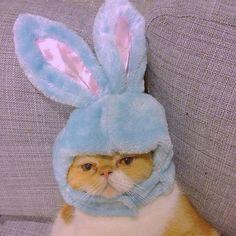 Looks like kitty might cry