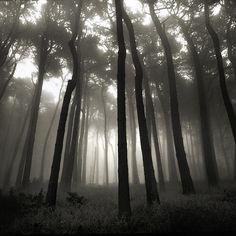forest fog | Flickr - Photo Sharing!