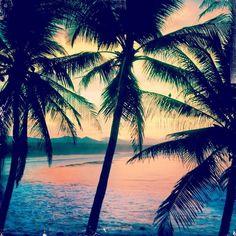 Pink Palm Trees Tumblr Google Search Tropical Paradise Beach Summer