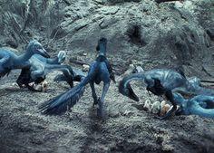 Troodon - Dinosaur Revolution - Prehistoric life
