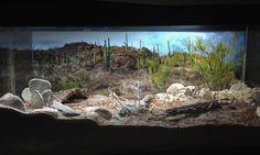 desert vivariums | Naturalistic Sonoran Desert Vivarium- Like the look but not too creative