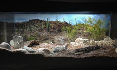 desert vivariums | Naturalistic Sonoran Desert Vivarium- Like the look but not too creative