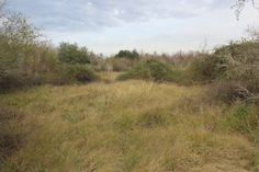 Meadow in George Bush Park