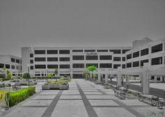 Lattakia University