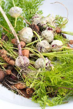 Hämmentäjä: Valkosipulin kasvatus ja kasvimaan syystöitä. Growing garlic and carrots. Autumn work in the garden.