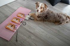 Pet Dogs, Dog Cat, Dog Puzzles, Dog Corner, Diy Dog Toys, Homemade Toys, Sheltie, Australian Shepherd, Happy Dogs