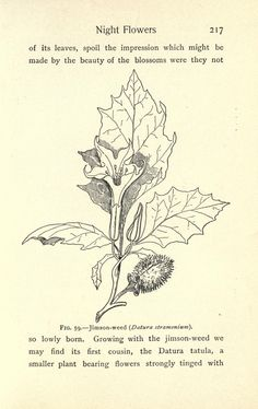 Field, forest, and wayside flowers; - Biodiversity Heritage Library
