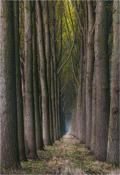 coffeenuts:  The cathedrals of Bruges by Pascal Bobillon - http://ift.tt/1klNCqW
