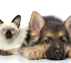 chat et chien taner