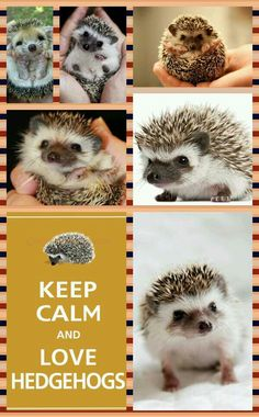 KEEP CALM AND LOVE HEDGEHOGS THERE ARE SO FLUFFY!!!!!!!!!!!!!!!!!!!!!!!!!!!!!!!!!!!!!!!!!!!!!!!!!!