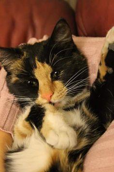kız kedi yavru