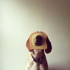 maddie-on-things-photography-5 #dogs #pets #CoonHounds