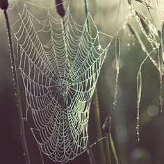 Halloween photograph, Spider Web - Pearly dew drops drop - Autumn, Nature, Morning Dew Saved on November 2011 pm Abstract Photography, Nature Photography, Poetry Photography, Levitation Photography, Spring Photography, Photography Ideas, Spider Art, Spider Webs, Eyes Poetry