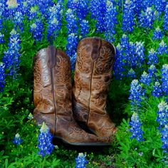 Boots and Bluebonnets                                                       …