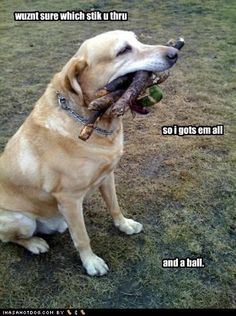 This is so my brother and sister's dog Jack. He tries to carry as many toys in his mouth as possible