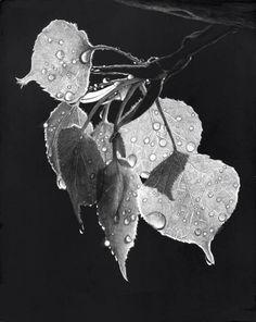 Amazing work by Lorna Wagner Hannett. Scratchboard Art, Plant Leaves, Bats, Drawings, Amazing, Creative, Artist, Trees, Animals