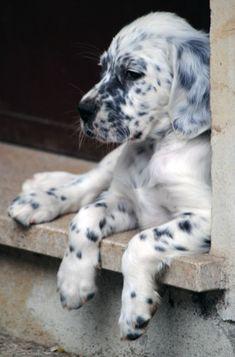 Dog Breeds Little .Dog Breeds Little Animals And Pets, Baby Animals, Funny Animals, Cute Animals, Cute Puppies, Cute Dogs, Dogs And Puppies, Doggies, Beautiful Dogs