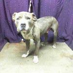 DESTROYED WITH A GREAT DEAL OF PLEDGE MONEY BECAUSE NO RESCUE CARED! RT Lyle http://on.fb.me/18Aqpbp pls save ths sweet boy San B... on Twitpic