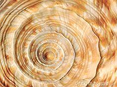Spiral on sea shell by Andreas Karelias, via Dreamstime