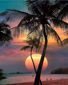 Wonderful Places: Sentosa Island - Singapore ✨🌴🌴🌴✨ Picture by ✨✨ . for a feature . Beautiful Moon, Beautiful Sunrise, Beautiful Beaches, Beautiful World, Sentosa Island Singapore, Palm Trees Beach, Palm Tree Sunset, Sunset Beach, Beach Sunsets