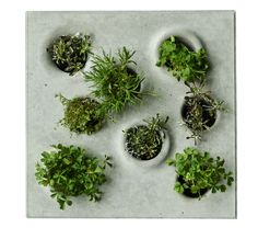 From Gray to Green: Pavers with Plants from Stockholm: Gardenista