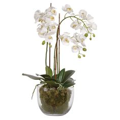 Exquisite orchid phalaenopsis plants with moss in a beautiful glass bowl. Looks realistic and needs no watering or fussing. This will look gorgeous all year round especially in places that plants traditionally do not do well in like a dark bathroom or a s White Tulips, White Orchids, Moss Plant, Sideboard Furniture, Clear Glass Vases, Phalaenopsis Orchid, Faux Plants, Garden Accessories, Vases Decor