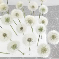 Make dandelion durable as a gift (with line and color .- Pusteblume haltbar machen zum Verschenken (mit Strich und Faden) Make dandelion durable as a gift with line and thread Diy Crafts To Do, Upcycled Crafts, Diy For Kids, Crafts For Kids, Machine Quilting, Diy Gifts, Diy Projects, How To Make, Painting