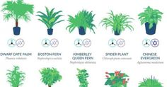 NASA's list of best air-filtering plants. NASA research discovered the plants that are most effective at cleaning indoor air. Organic Gardening, Gardening Tips, Gardening Supplies, Indoor Gardening, Air Filtering Plants, Best Air Filter, Chlorophytum, Boston Ferns, Spider Plants