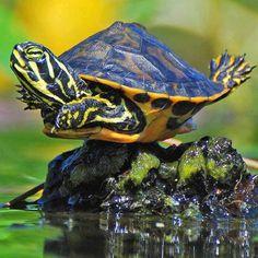 Je nage !!!