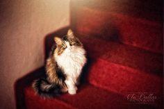 my cat Camilla...